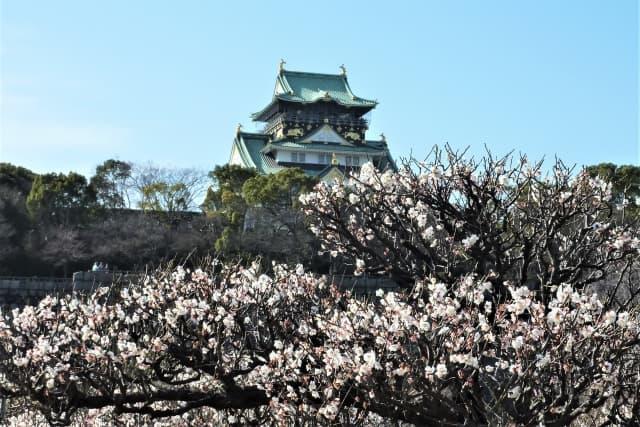 大阪の大阪城の写真